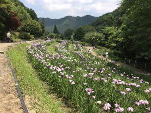 休暇村グループの公共の宿 国民宿舎両神荘 花しょうぶ園
