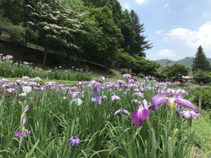 休暇村グループの公共の宿 国民宿舎両神荘 花しょうぶ園2