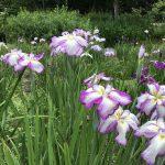 休暇村グループの公共の宿 国民宿舎両神荘 花しょうぶ園3