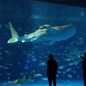 休暇村グループの公共の宿 国民宿舎レインボー桜島 水族館付宿泊プラン