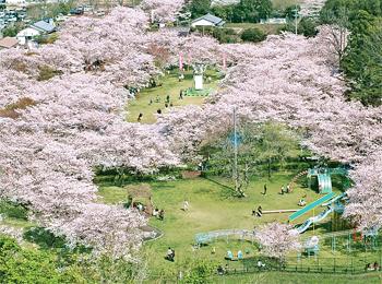 国民宿舎ボルベリアダグリ 桜