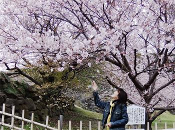 国民宿舎波戸岬 桜