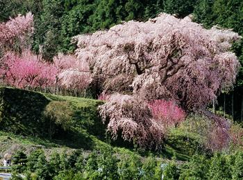 保養センター美榛苑 桜