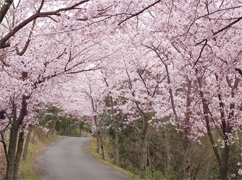 国民宿舎能美海上ロッジ 桜
