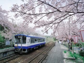 国民宿舎能登小牧台 桜