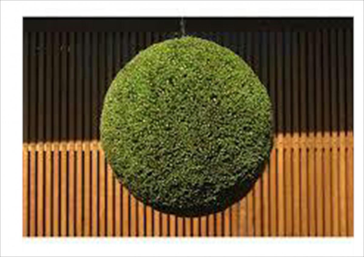 日本酒の造り酒屋などの軒先に緑の杉玉を吊すことで、新酒が出来たことを知らせる役割を果たしています。吊るされたばかりの杉玉はまだ杉の葉の青々しさが残っていますが、やがて枯れて茶色がかってきます。この色の変化がまた人々に、新酒の熟成の具合を伝えるのです。