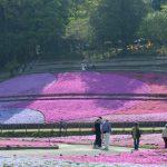 休暇村グループの公共の宿 国民宿舎両神荘 羊山(芝桜)