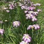 休暇村グループの公共の宿 国民宿舎両神荘 花しょうぶ3