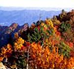 両神山頂から望む紅葉の絶景