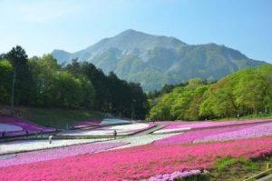 休暇村グループの公共の宿 国民宿舎両神荘 羊山公園(芝桜)