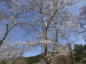 休暇村グループの公共の宿 国民宿舎両神荘 桜
