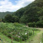 休暇村グループの公共の宿 国民宿舎両神荘 6.25花しょうぶ写真