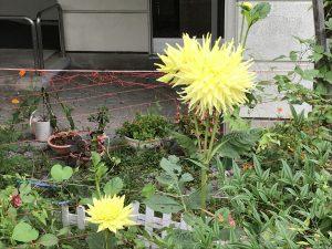 休暇村グループの公共の宿 国民宿舎両神荘 ダリア