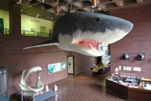 休暇村グループの公共の宿 国民宿舎両神荘 自然史博物館