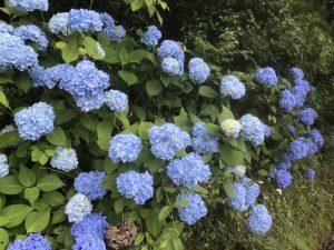 休暇村グループの公共の宿 国民宿舎両神荘 紫陽花2