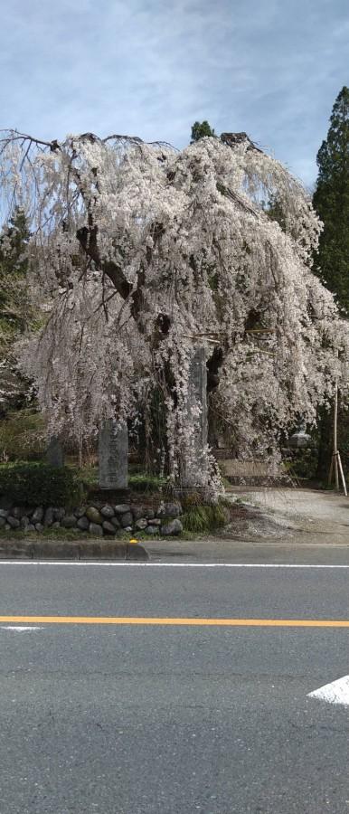 休暇村グループの公共の宿 国民宿舎両神荘 法善寺 桜