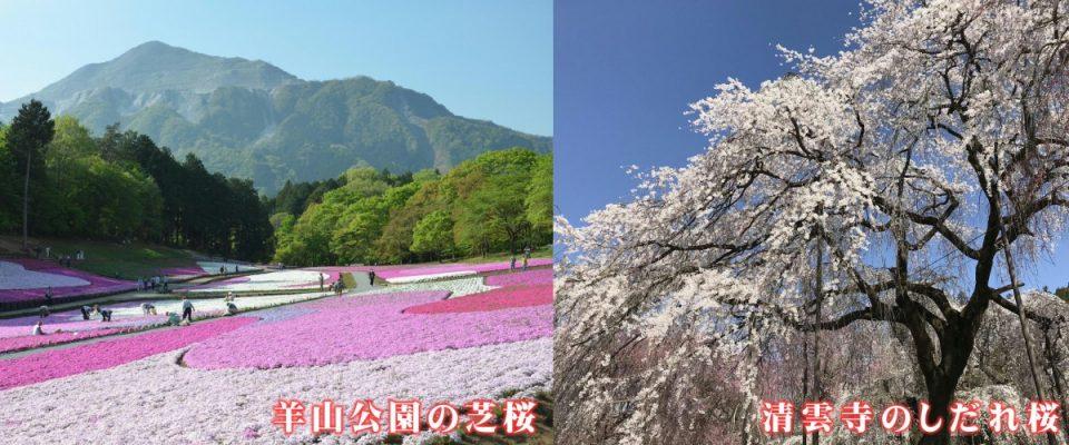 休暇村グループの公共の宿 国民宿舎両神荘 芝桜&しだれ桜
