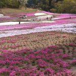 休暇村グループの公共宿 国民宿舎両神荘 芝桜