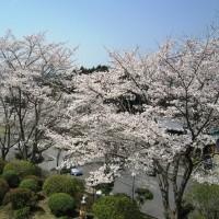 休暇村グループの公共の宿 保養センター美榛苑 桜1