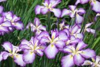 休暇村グループの宿 国民宿舎両神荘 花しょうぶ