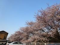 休暇村グループの公共の宿 国民宿舎能登小牧台 桜 七尾