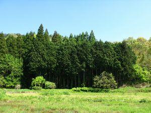 休暇村グループ公共の宿むいかいち温泉ゆ・ら・らの森林
