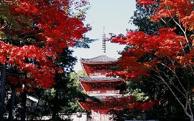 休暇村グループの公共の宿 宝福寺の紅葉2