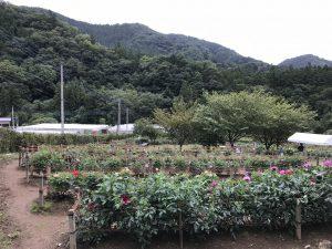 休暇村グループの公共の宿 国民宿舎両神荘 ダリア5