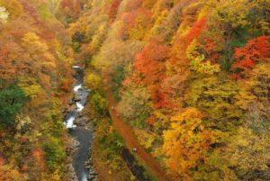 休暇村グループの公共の宿 国民宿舎両神荘 中津川渓谷の紅葉