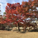 休暇村グループの公共の宿 保養センター美榛苑