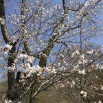 休暇村グループの公共の宿 国民宿舎両神荘 桜3