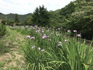 休暇村グループの公共の宿 国民宿舎両神荘 花しょうぶ2