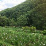 休暇村グループの公共の宿 国民宿舎両神荘 6.25花しょうぶ写真3