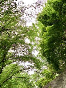 休暇村グループの公共の宿 国民宿舎両神荘 散策3