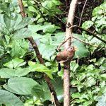 休暇村グループの公共の宿 国民宿舎両神荘 野鳥2