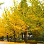 休暇村グループの公共の宿 国民宿舎両神荘 イチョウ並木