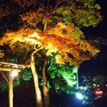 休暇村グループの公共の宿 国民宿舎両神荘 宝登山神社ライトアップ