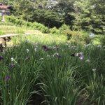 休暇村グループの公共の宿 国民宿舎両神荘 花しょうぶ